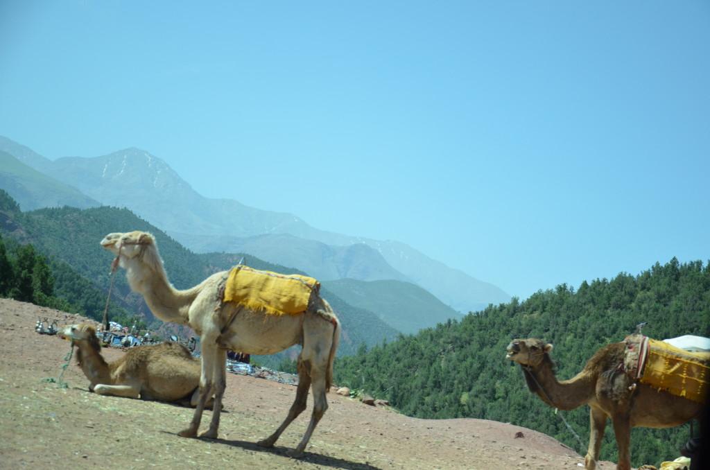 DSC 5353 1024x678 Marrakesz... Ourika! Day 3