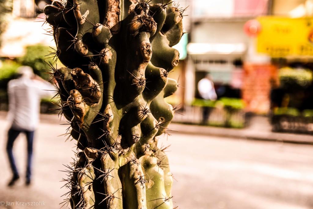Meksyk 2012 1024x682 Ciudad de Mexico...