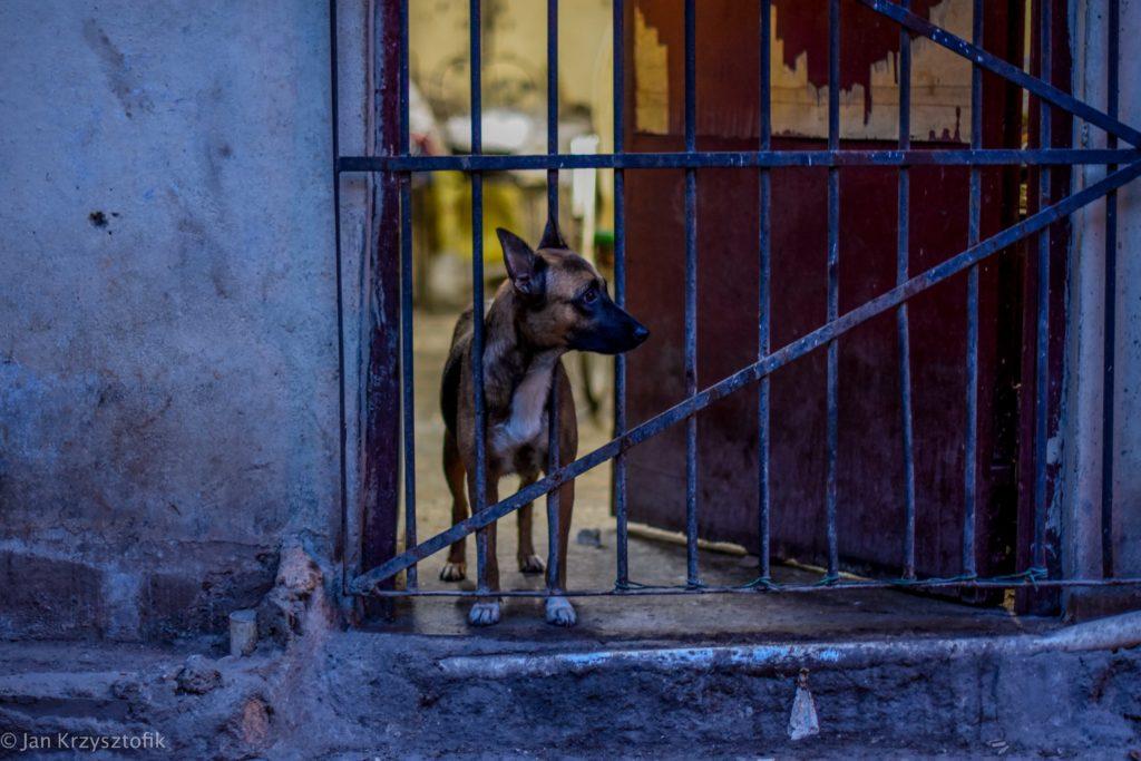 Kuba 44 of 159 1024x683 Kuba